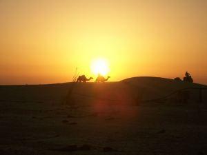 camelsunset